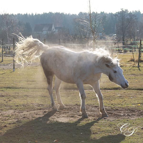 Pferdefotografie-Cornelia-Paul-05