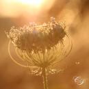 Makrofotografie-cornelia-paul03