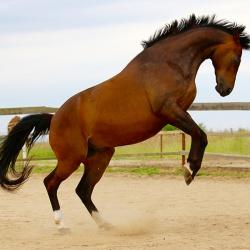 Pferdefotografie Cornelia Paul 10