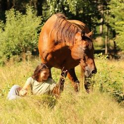 Pferdefotografie Cornelia Paul l2
