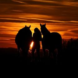 Pferdefotografie Cornelia Paul 11