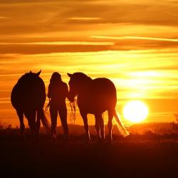 Pferdefotografie Cornelia Paul 12