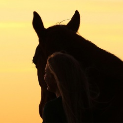 Pferdefotografie Cornelia Paul 13