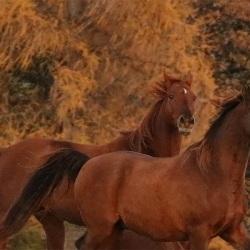 Pferdefotografie Cornelia Paul 14